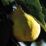 20-tutti-frutti-le-monde-des-fruits