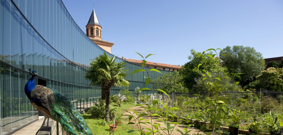 Muséum d'histoire naturelle de Toulouse - Espace Pédagogique des médiation